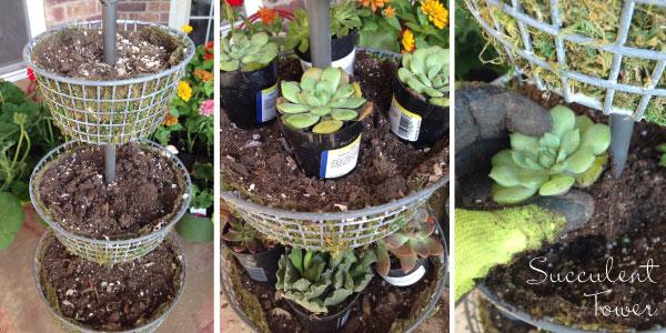 succulent-feature-image